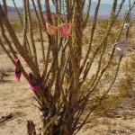 Bra & Shoe Tree