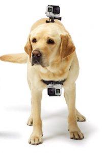 dog-go-pro